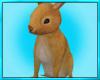 Pet Bunny Rabit