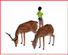 Venado Animals