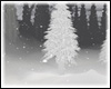 Snowing Forest Night