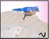 N| Pio blue M/F