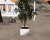 White Tree Planter