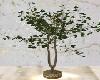 Home / Light Tree