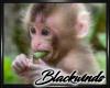 Monkey Bamboo Pic V.5