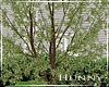 H. Spring Tree V2