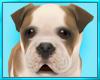 Bulldog Puppy Dog