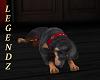 Rottweiler Pet