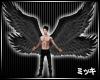 ! Dark Wings #Animated