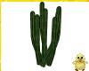 !! Night Cactus