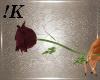!K! Single Magenta Rose