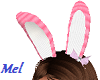 (ZN) Bunny Bow Animated