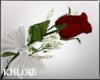 K single red rose