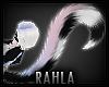 TAZZA Tail 3
