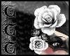 TTT Hair Roses ~ Blanc