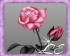 Pink rose (right)