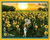 Sunflowers Paradise 2020