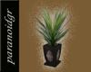G-Elegante Yucca