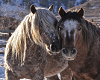 Wild Horses Poster 2