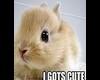 bunny sticker cute