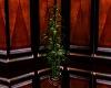 Sake Club Bamboo Plant