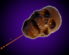 Chocolate Skull Lollipop