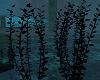 Under Sea Plant