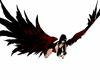 Red & Black Wings Single