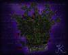 Stone Rose Planter