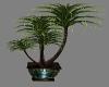 PLANT EMERALD LOFT