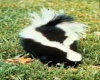 A house with Skunks