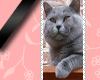 long stamp cat Uncas