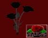 {NRT}Black Roses