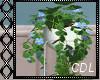 !C* Boho Plant