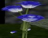 BluetoWhite Rose