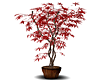 Red potted Tree