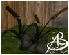{AB} Swamp Plant