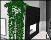 >> Hanging Ivy.