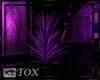 Purple Feather Plant