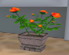 Orange Rose Pot