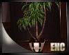 ENC. MAHOGANY PLANT