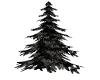 Winter Evening Fir Tree