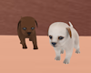 PuppyiesTwins+Chihuahua