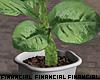 Minimalist Tropic Plant