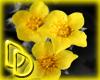|DD| Flower Splash 2