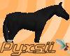 Black Horse (pet)