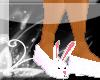 D07S Bunnies