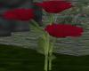 Red Purple Rose