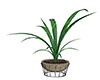 D   Poet Plant