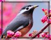 Bird Sounds Voicebox