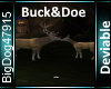 [BD]Buck&Doe