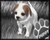 [Pup]Millie Puppy Pet